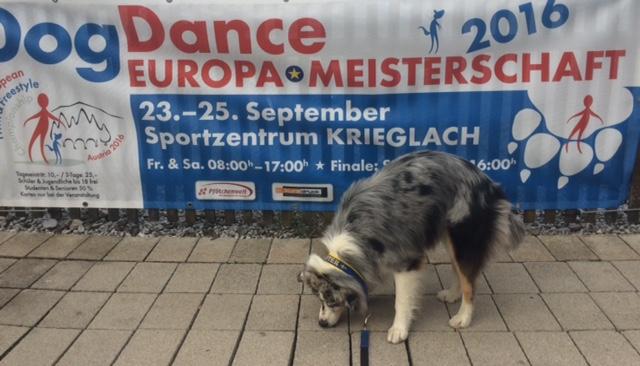 Tror att jag och min hund har lite olika mål med vår vistelse i Österrike ????